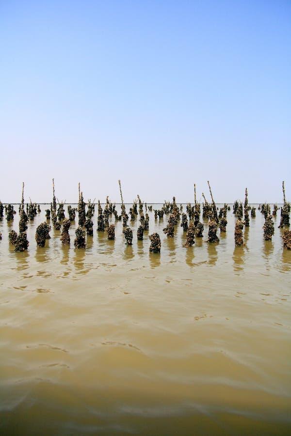 rolny mussel zdjęcia royalty free