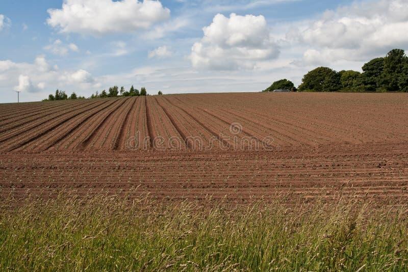 rolny pole Scotland zdjęcia stock