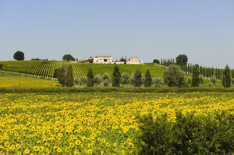 rolny Umbria zdjęcia stock