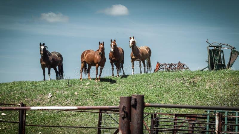 Rolnych koni stojak na Trawiastym wzgórzu obrazy royalty free