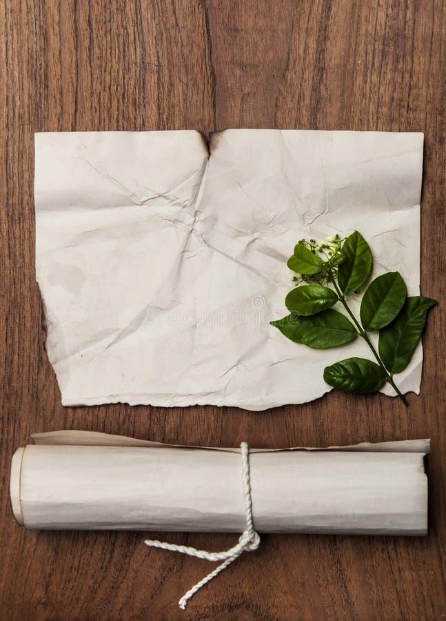 Rolo antigo com textura de papel retro e folha verde para o fundo imagens de stock