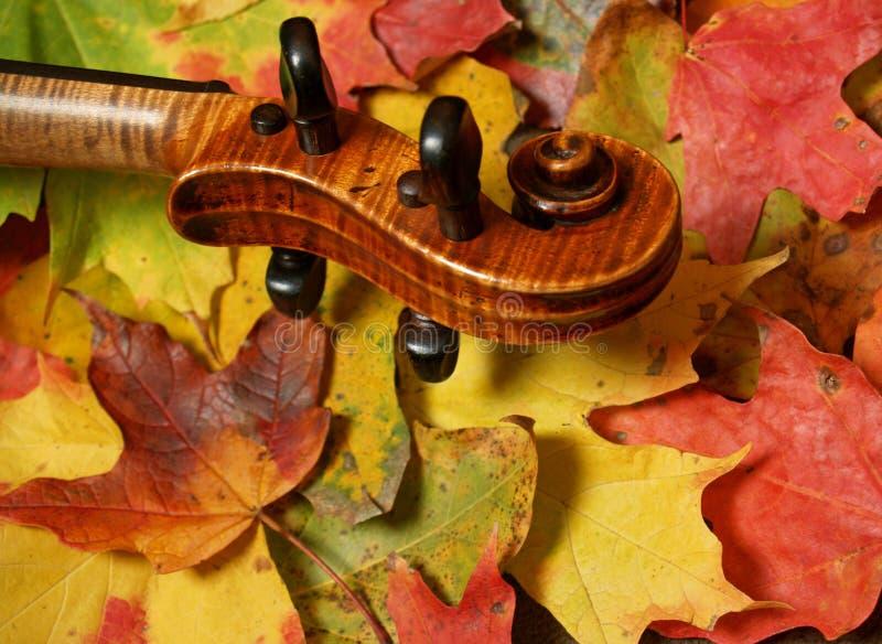 Rolo do violino do bordo & folhas de outono foto de stock