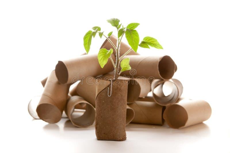 Rolo vazio do papel higiênico feito em um plantador fotografia de stock royalty free
