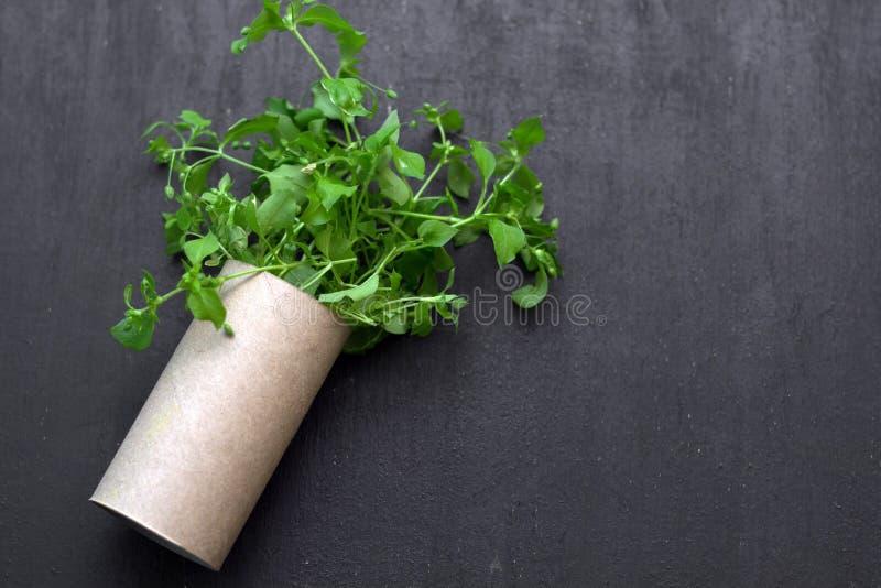 Rolos de papel higiênico vazios com a planta para dentro fotografia de stock