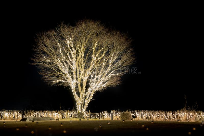 Romántico sceen de solo árbol iluminado llevado decorativo en blac foto de archivo libre de regalías