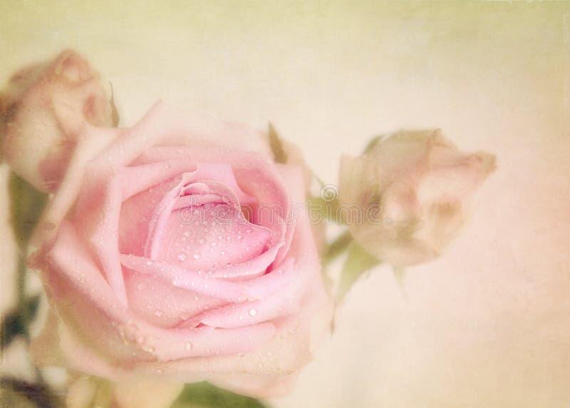 Romántico subió. Imagen conceptual de la textura. fotografía de archivo libre de regalías