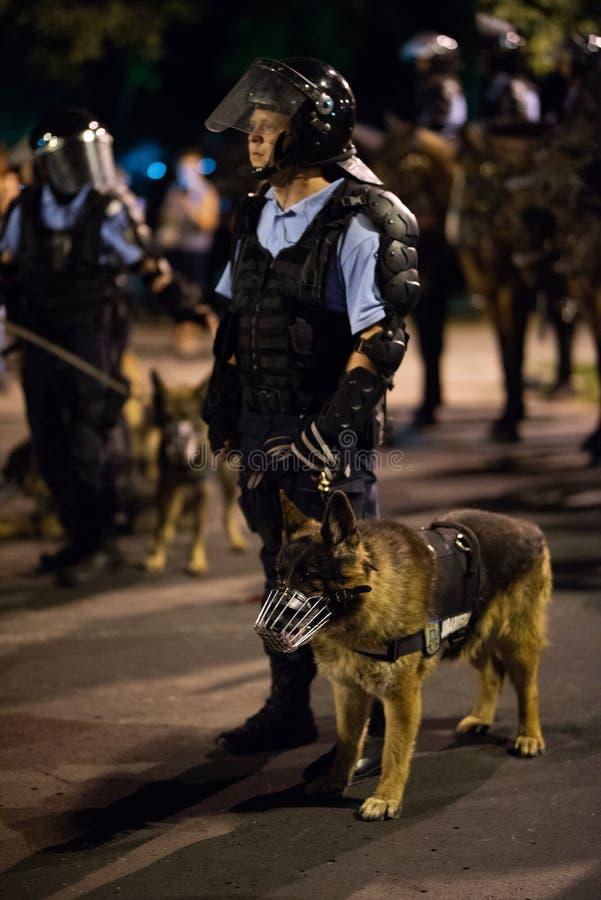 Romênia, Bucareste - 10 de agosto de 2018: A polícia equipa com cão treinado fotos de stock royalty free