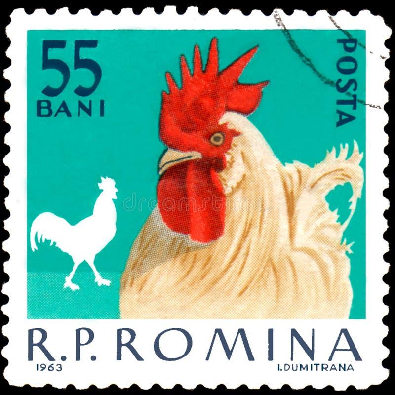 ROMÊNIA - CERCA DE 1963: Selo postal impresso em Romênia, galo das mostras fotos de stock