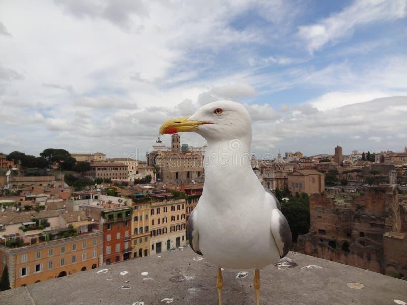 rom stockfoto