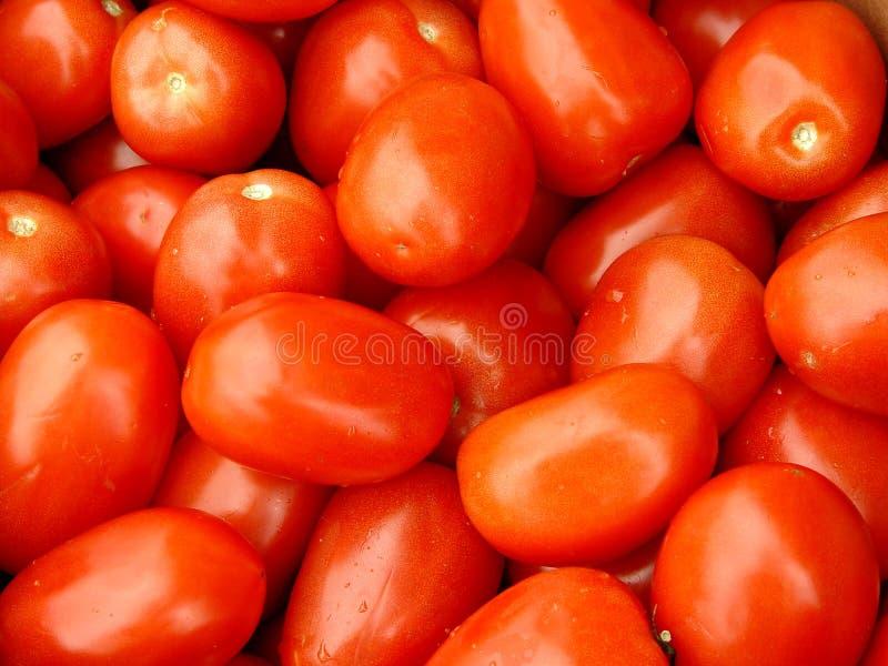 Rom-Tomaten lizenzfreie stockbilder