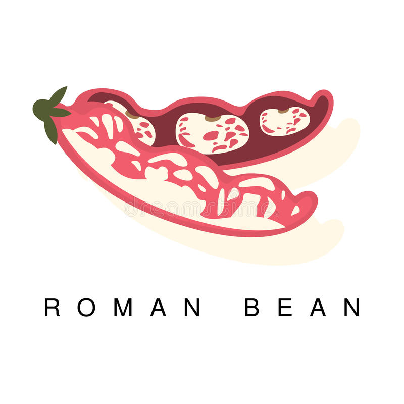 Romański Bobowy strąk, Infographic ilustracja Z Realistyczną pelengów Legumes rośliną I Swój imię, royalty ilustracja