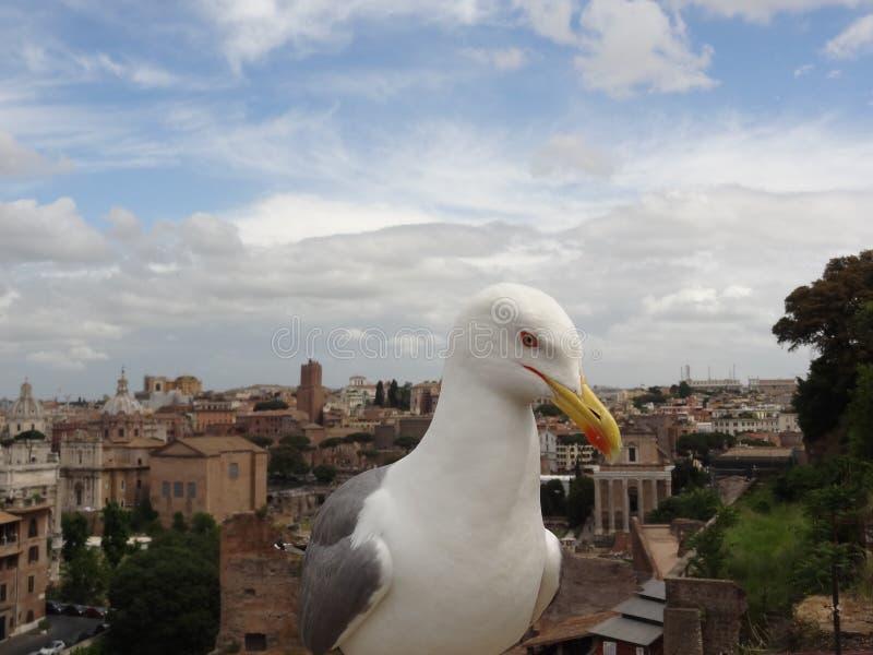 roma photos libres de droits