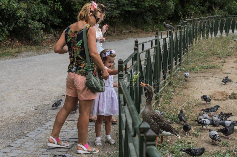 ROMA, ITÁLIA - EM AGOSTO DE 2018: A família feliz alimenta patos e os pombos em uma cidade estacionam foto de stock royalty free