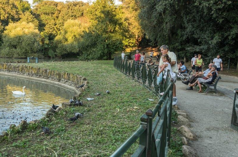 ROMA, ITALIA - AGOSTO 2018: La gente alimenta le anatre ed i piccioni nel parco della città sul lago alla villa Doria Pamphili immagini stock libere da diritti