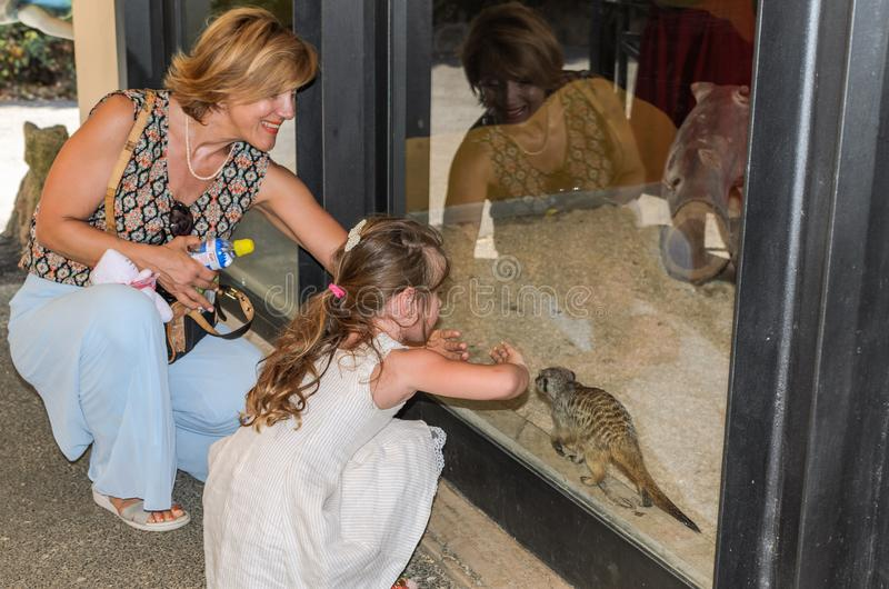 ROMA, ITALY - JULY 2019: Tourists play with groundhogs in the zoo aviary. Tourists play with groundhogs in the zoo aviary royalty free stock photos