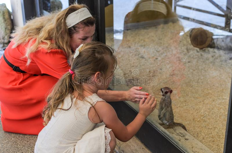 ROMA, ITALY - JULY 2019: Tourists play with groundhogs in the zoo aviary. Tourists play with groundhogs in the zoo aviary stock photo