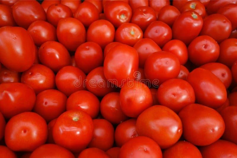 Roma pomidory obraz stock