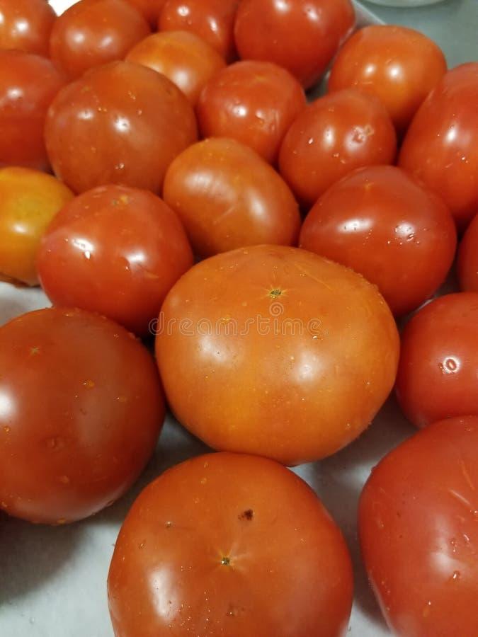 Roma Tomatoes fotografie stock libere da diritti