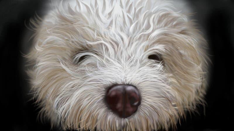 Romagnoli do lagotto do cão imagens de stock