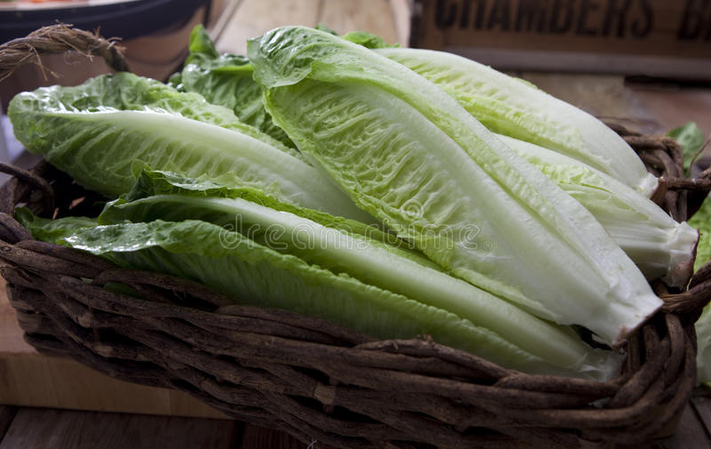 Romaine or cos lettuce. Arranged in a wicker basket stock photo