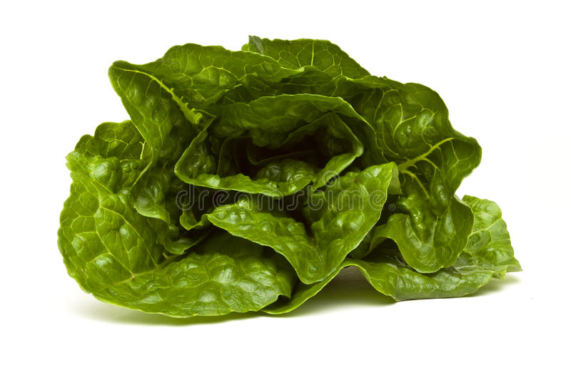 Download Romaine lettuce stock photo. Image of leafy, freshness - 16231656