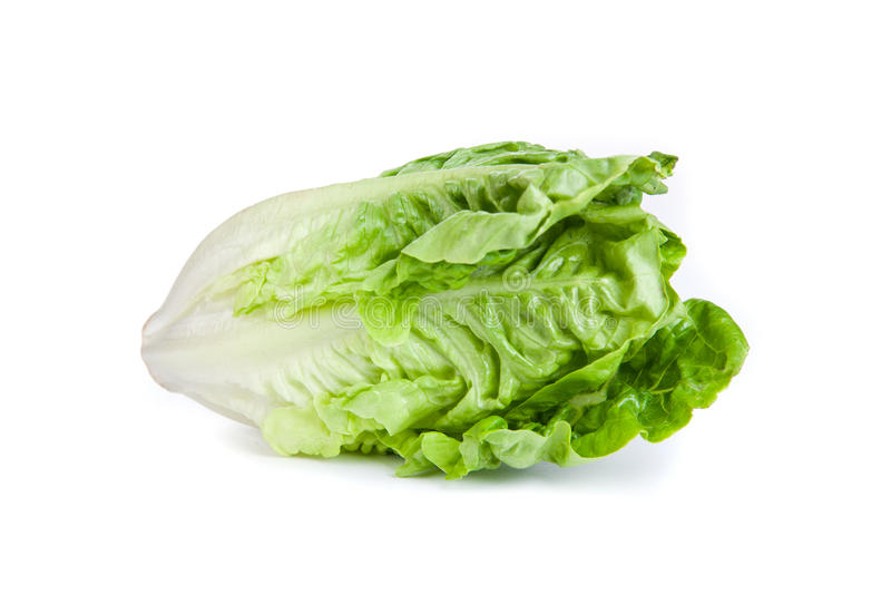 Romaine lettuce. Picture of a romaine lettuce royalty free stock image