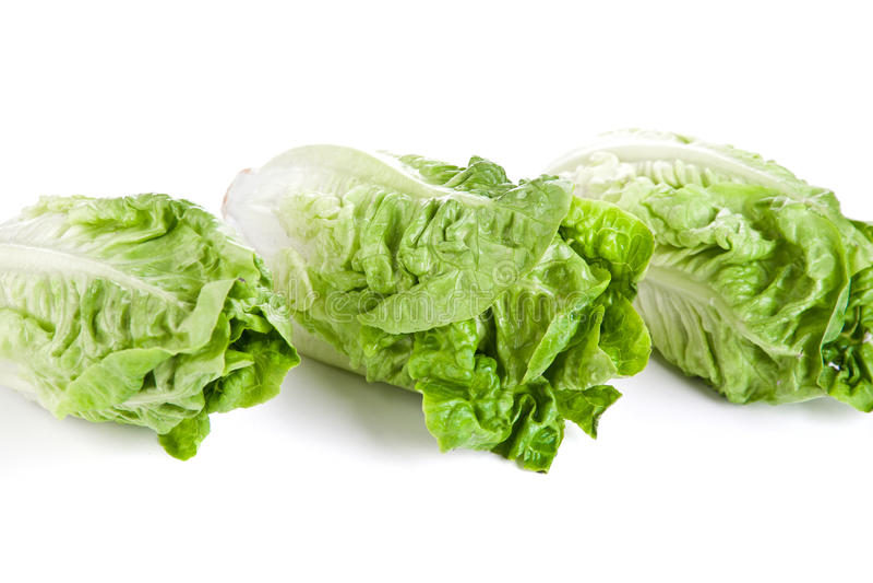 Romaine lettuce. Picture of a romaine lettuce stock photos