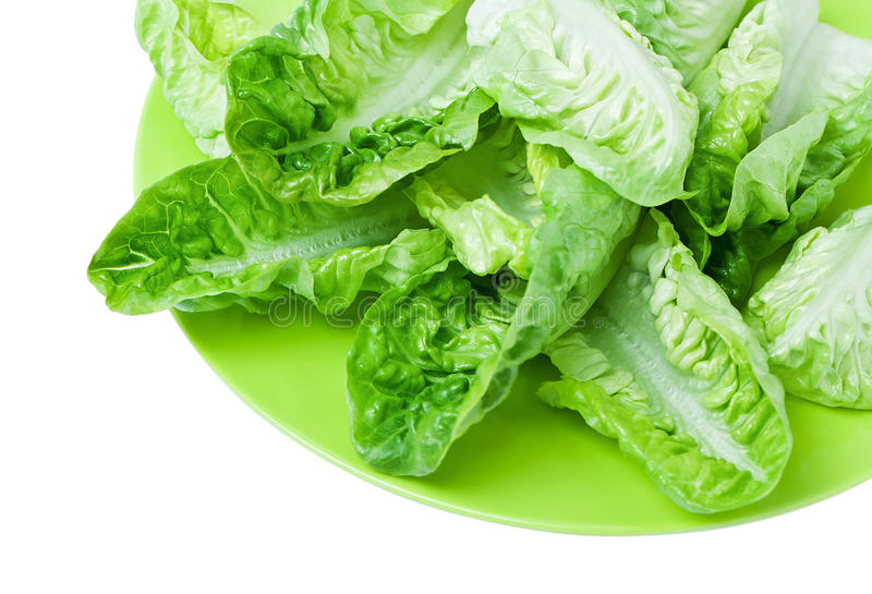 Romaine lettuce. Fresh green romaine lettuce on a plate closeup royalty free stock photography
