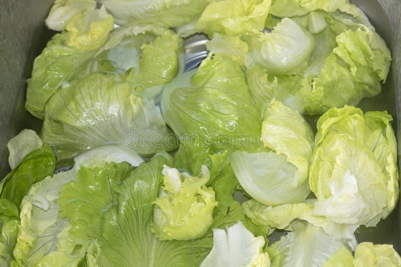 Download Romaine Lettuce image stock. Image du detox, bain, laitue - 56488121