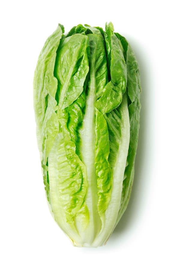 Romaine Lettuce photos libres de droits