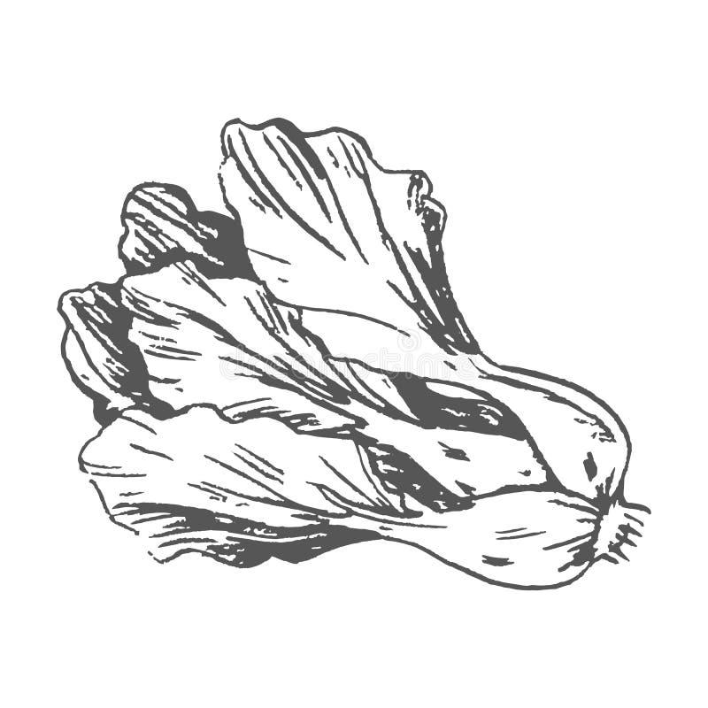 Romaine Lettuce Colorless Graphic Illustration illustration de vecteur