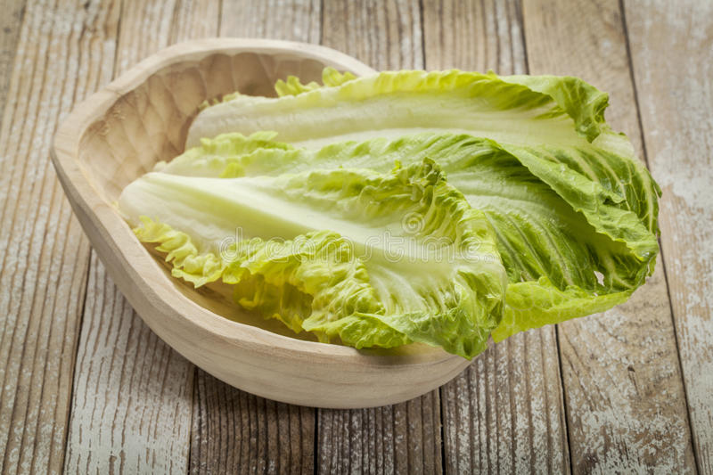 Romaine lettuce. Fresh leaves of romaine lettuce in a rustic wooden bowl royalty free stock photo