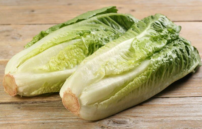 Romaine lettuce hearts stock photography
