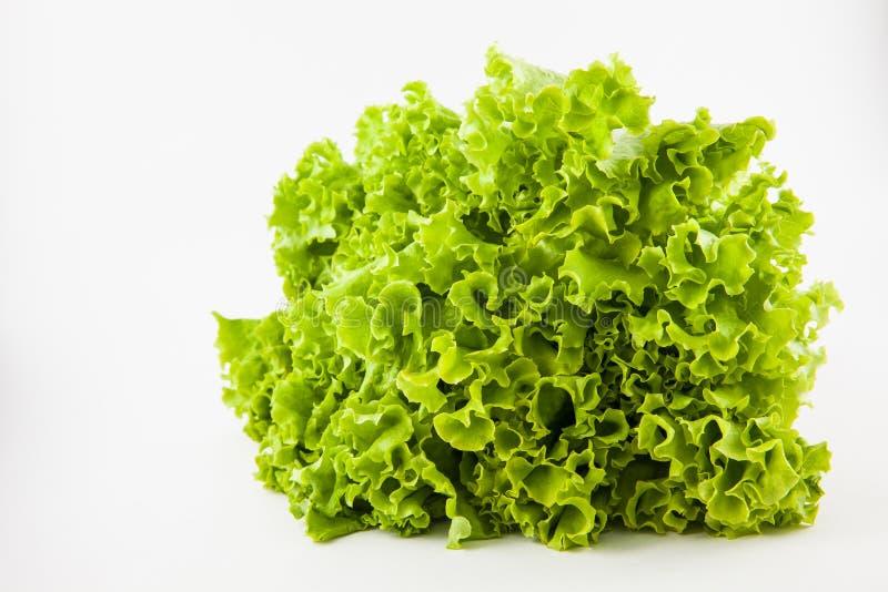 Romaine lettuce Lactuca sativa. Isolated in white background stock image