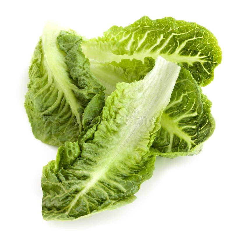 Romaine Lettuce Leaves Royalty Free Stock Image