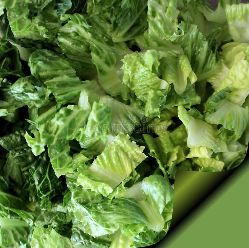 Download Romaine Lettuce - Recipe Page Stock Image - Image: 21129755