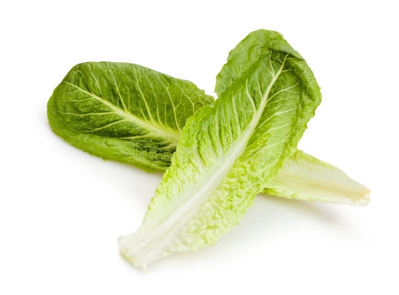 Romaine lettuce. On white background stock photography