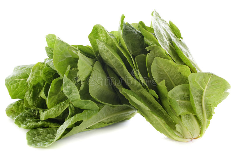 Romaine lettuces. In front of white background stock photo