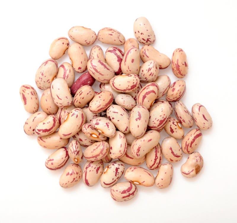 Roman bean royalty free stock photo