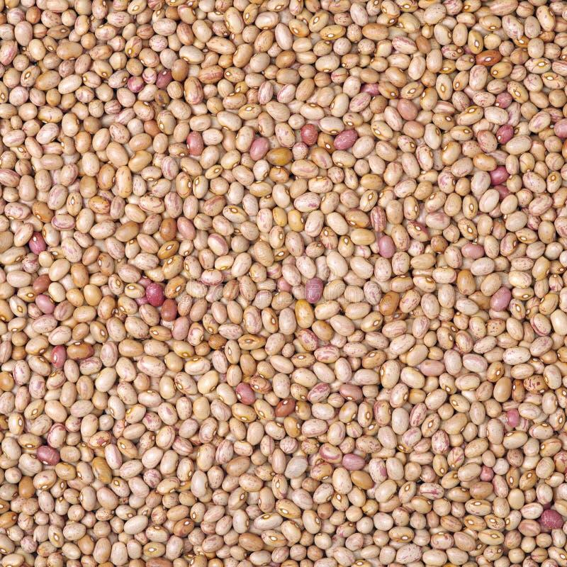 Roman bean royalty free stock image