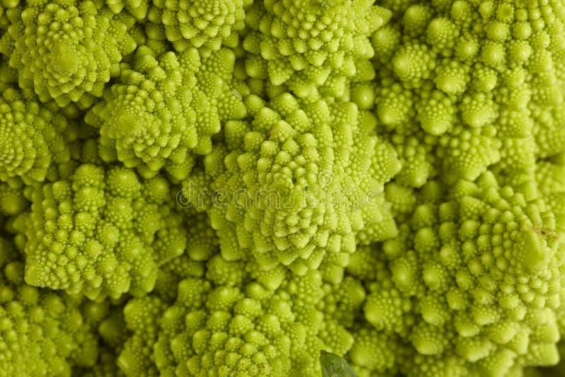 Download Roman broccoli stock photo. Image of roman, flower, life - 17174902