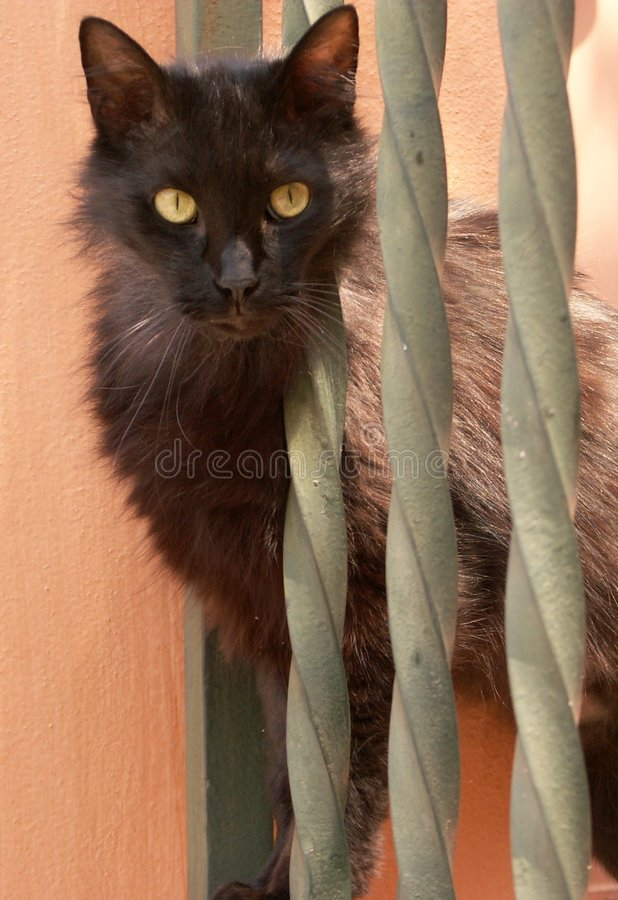 Roman cat royalty free stock photo