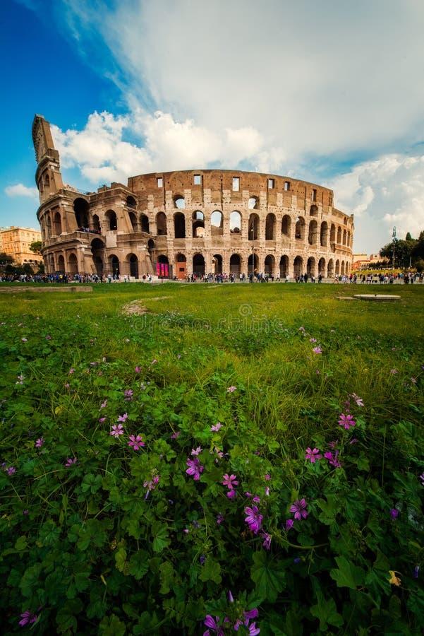 Roman Colosseum Coloseum à Rome, Italie, vue verticale avec des fleurs dans le premier plan photo libre de droits