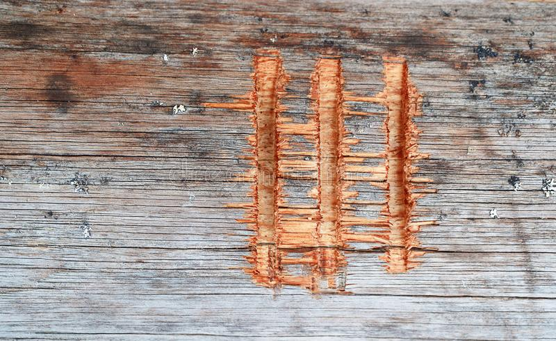 The Roman numeral 3 is cut out on a log of a wooden house in the village. The old house stock photography