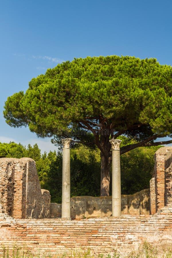 Roman pillars at Ostia Antica Italy with Stone pine or Pinus pin. Roman pillars at Ostia Antica, roman city. Stone pine or Pinus pinea tree in background, Rome royalty free stock photography