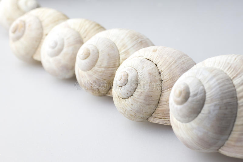 Roman snail shells. On a white background stock image