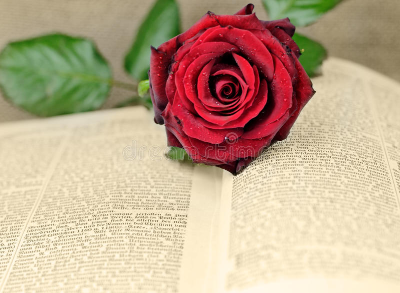 Download Romance stock image. Image of history, romance, rose - 21473991
