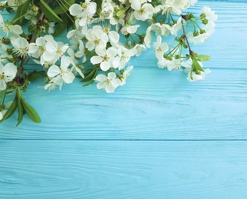 Romance de décoration de printemps de frontière de carte de branche de fleurs de cerisier sur un fond en bois bleu photo libre de droits
