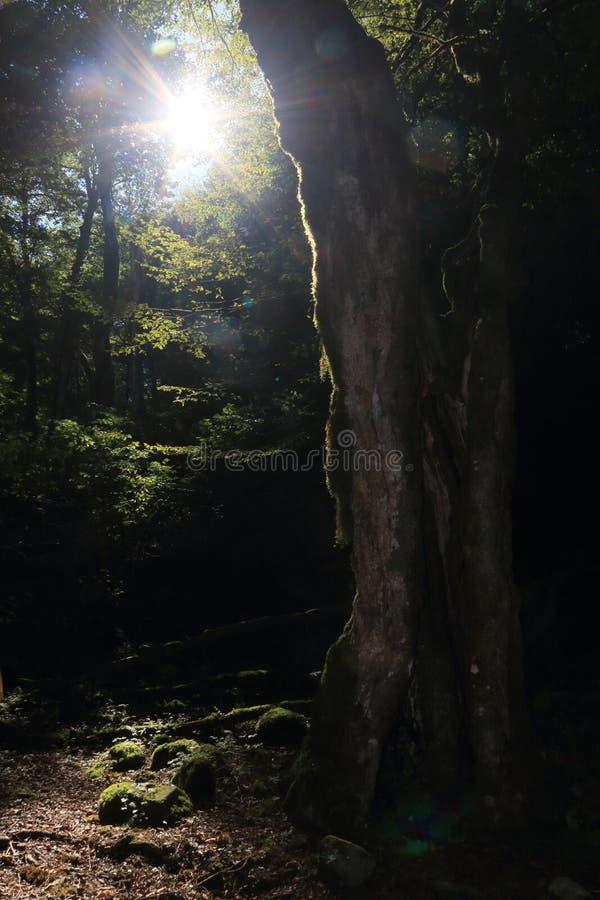 Romance de forêt images libres de droits