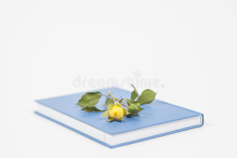 Romance novel. Book and flower - romance story concept royalty free stock images